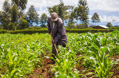 Free African Farmer Weeding Royalty Free Stock Images - 54386789