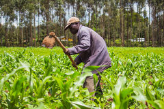 African Farmer Weeding Stock Photos