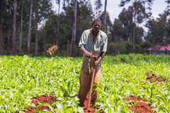 African Farmer Weeding Stock Images