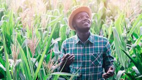Free African Farmer With Hat Stand In The Corn Plantation Field.16:9 Style Royalty Free Stock Photo - 180884455