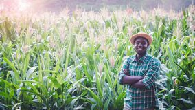 Free African Farmer With Hat Stand In The Corn Plantation Field Stock Photography - 180884452