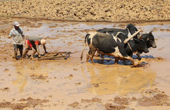 African farmer at work in Madagascar Royalty Free Stock Photography