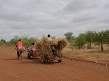 African farmers drive cart pulled stock image