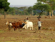 African farmers working on the field royalty free stock image