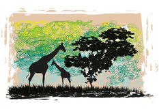 African fauna and flora card. Grunge Background with African fauna and flora Stock Photo
