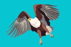 African Fish Eagle, vector illustration sky fly royalty free illustration