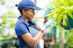 African florist checking Royalty Free Stock Images
