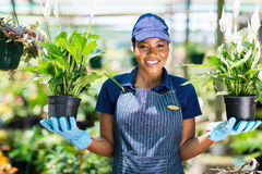 African florist flowers Royalty Free Stock Image