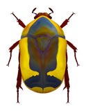 African flower chafer. An illustration of an african flower chafer (Pachnoda ephippiata). Contains gradient meshes vector illustration