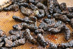 African food - fried beatles Stock Photography