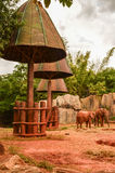 African forest elephant zoo Stock Image