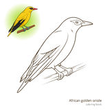 African Golden Oriole bird coloring book  Royalty Free Stock Image