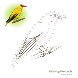 African Golden Oriole bird learn to draw vector Royalty Free Stock Photography
