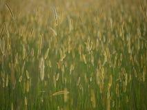 African Grasslands Stock Images
