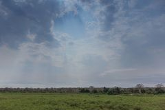 African green field in angola. Dramatic sky. In Africa Royalty Free Stock Photo