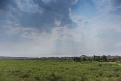 African green field in angola. Dramatic sky. In Africa Stock Photos
