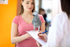 African grey parrot on hand in vet clinic Stock Photography