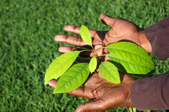 African growth stock photo