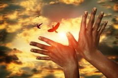 African hands and doves in the sunset sky, concept Peace Stock Images