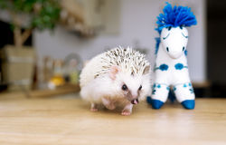 African hedgehog and toy horse Stock Photography