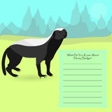 African Honey Badger. Against Symplistic Nature Background rand Poster with Space for Interesting Facts about rthis Animal. Educational Card for Childrens Royalty Free Stock Photo