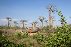 African house with baobabs royalty free stock photos