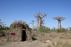 African hut with baobabs Stock Photos