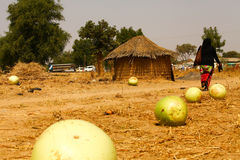 Fresh Calabash African Hut. Thatch roofed Royalty Free Stock Photos