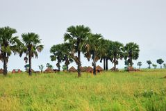 Huts in the village in Uganda, Africa Royalty Free Stock Photo
