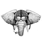 African or indian Elephant wearing motorcycle helmet, aviator helmet Illustration for t-shirt, patch, logo, badge. African or indian Elephant Hand drawn royalty free stock images