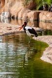 African jaribu fishing Royalty Free Stock Photos