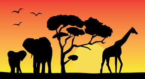 African landscape. With different animals Stock Photos