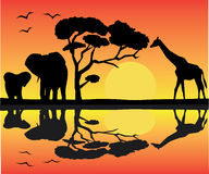 African landscape. With animals and reflection Stock Photo