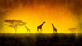 African Landscape. Flora and fauna in sunset time