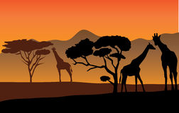 African landscape. With trees and giraffes Royalty Free Stock Images