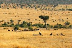 African landscape Stock Images