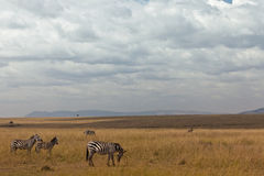 African landscape Royalty Free Stock Photo