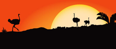 African landscape. With ostriches and sun. Vector illustration Royalty Free Stock Photography