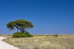 African landscape. A view of Namibian landscape against a blue sky Stock Photo
