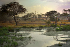 African landscape. With a acacia tree royalty free stock photo
