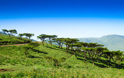 African landscape Stock Photos