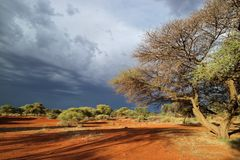African landscape against a stormy sky. African savannah landscape against a dark sky of an approaching storm, South Africa Royalty Free Stock Image