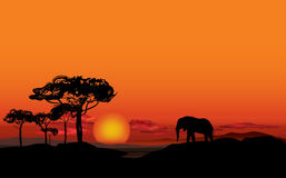 African landscape with animal silhouette. Savanna background. African landscape with elefant silhouette. Savanna sunset background Royalty Free Stock Photos