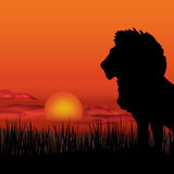 African landscape with animal silhouette. Savanna background. African landscape with lion silhouette. Savanna sunset background Royalty Free Stock Photos