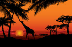 African landscape with animal silhouette. Savanna sunset backgro Stock Images