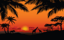 African landscape with animal silhouette. Savanna sunset backgro. Und Royalty Free Stock Photography