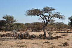 The African landscape in the area of the Somali town of Borama Stock Photography