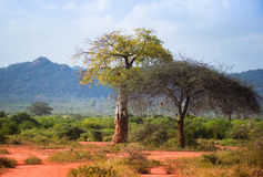 African  landscape with baobab tree Stock Photos