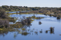 African Landscape: Delta River Coursing through Trees Royalty Free Stock Photo