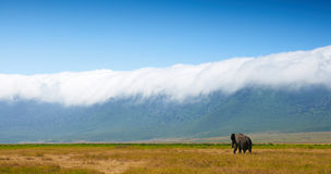 African landscape with elephant Stock Image